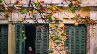 Phố cổ Hà Nội vào thu cây bàng lá đỏ