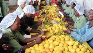 Des travailleurs d'Ecopia en pleine activité.