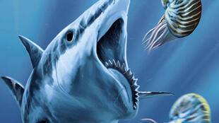 Requins de la Préhistoire à nos jours