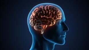 Simpatia pode estar relacionada a formato do cérebro