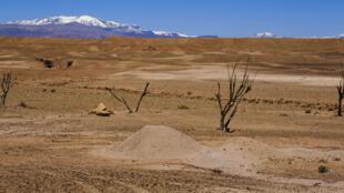 Des arbres dans le désert.
