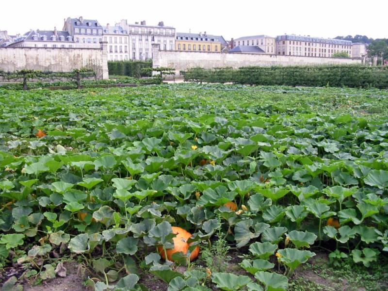 """凡爾賽法國國王路易十四的""""國王菜園"""" (Le Potager du Roi)"""