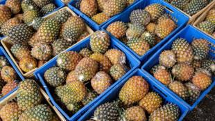 Avec environ 580 exploitants, la production d'ananas en Guinée est estimée à 12000 tonnes cette année.