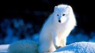 全球瀕危動物。