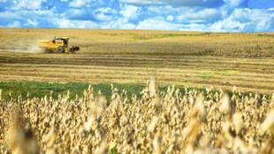 Plantação de soja no Brasil interessa os investidores chineses.