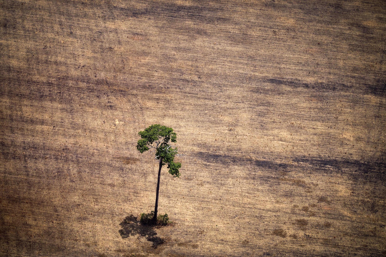 Zone de déforestation en Amazonie (image d'illustration).