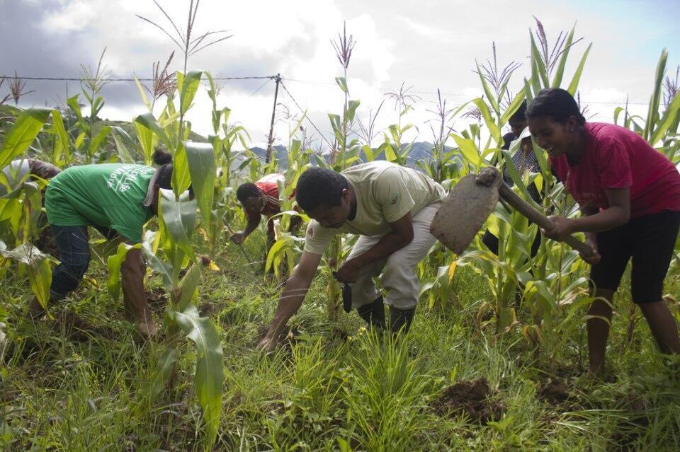 Le projet « Seeds of life » vise à augmenter des rendements agricoles sans produits chimiques.