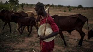 La transhumance des troupeaux dans le Sahel (photo d'illustration).