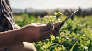 Agriculture connectée - Technologies - iStock-1303739116