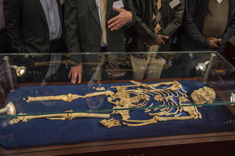Le squelette de «Little Foot», l'un des ancêtres de l'homme, a été dévoilé ce mercredi 6 décembre 2017, à Johannesburg, Afrique du Sud.