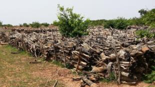 Marché de bois le long de RN6, dans la commune rurale de Makalondi.
