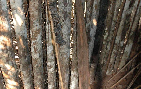 Antorcha de resina y estaca fabricada por el 'Último de su Tribu', encontradas por FUNAI en su choza, territorio de Tanaru, estado de Rondonia, Brasil, 2005.