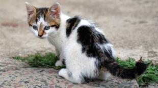 Les moustaches de chat ont inspiré des chercheurs de Berkley aux Etats-Unis pour mettre au point des capteurs.