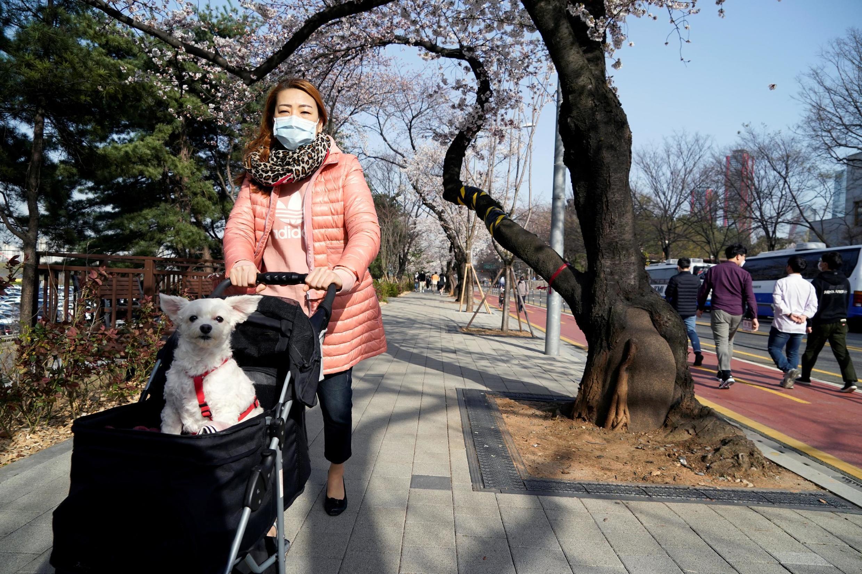 En Corée du Sud, une passante équipée de son masque, dans une rue de Séoul, le 1er avril.