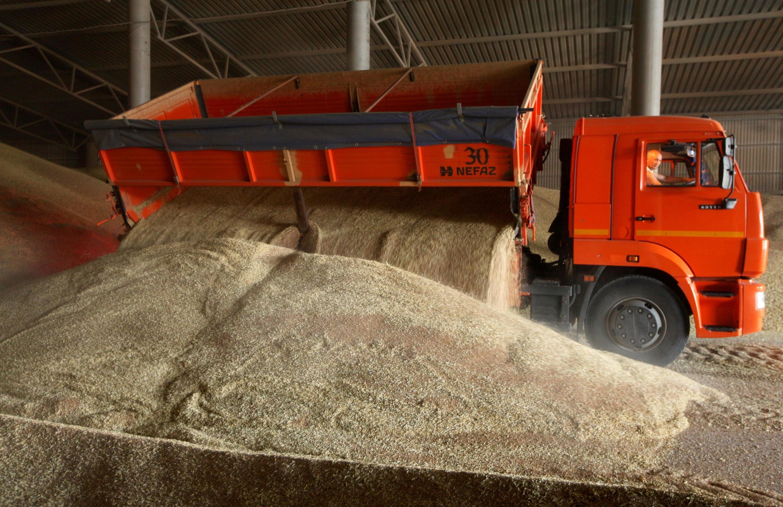 Récolte de blé à Kamennobrodskaya, dans la région du Stavropol en Russie.