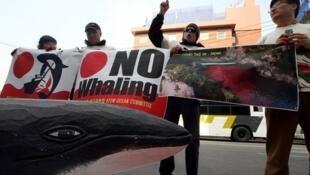 韩国环保人士抗议日本滥捕鲸鱼(2010年3月19日)