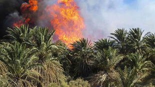 در آتش سوزی شهرستان دشتستان، ۶٣۵ نخل در آتش سوختند