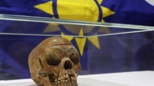 L'un des 20 crânes de guerriers hereros et namas, exposé lors d'une cérémonie à l'hôpital de la Charité de Berlin, le 30 septembre 2011.