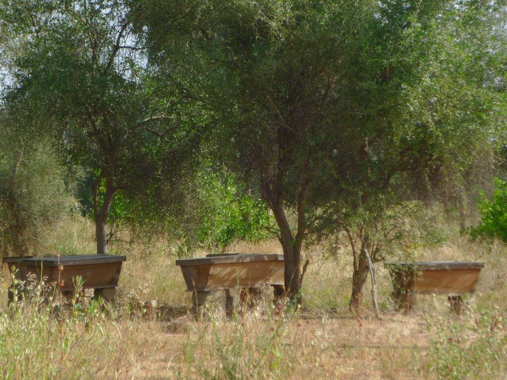 Jardin de Widou, les nouvelles ruches.