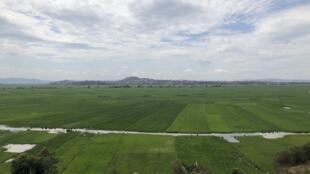 Vue des rizières sur lesquelles les autorités ont prévu de construire la nouvelle ville Tanamasoandro d'une superficie de 1000 hectares.