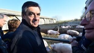François Fillon visita una granja de cerdos en su feudo electoral de la Sarthe para lanzar oficialmente su campaña electoral. 1 de Diciembre de 2016.