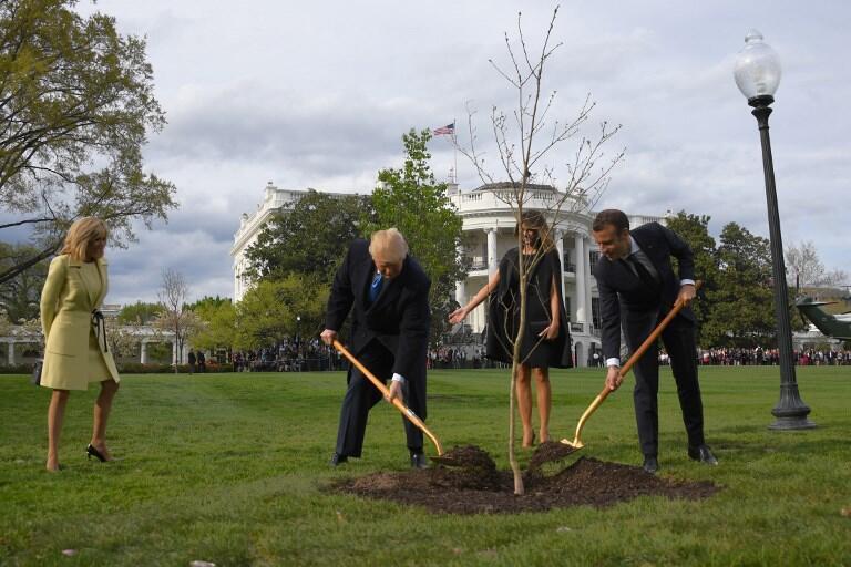A l'aide de deux pelles dorées, les présidents américain et français ont recouvert un chêne offert par la France, dans les jardins de la Maison Blanche, le 23 avril 2018.