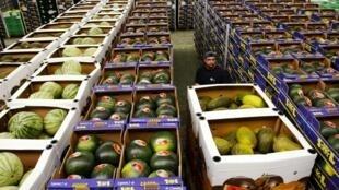 Exportações de legumes europeus para a Rússia representam entre 3 e 4 bilhões de euros anuais.