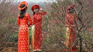 Thiếu nữ áo dài và hoa đào trong dịp Tết Nguyên đán tại Việt Nam (Ảnh chụp ngày 22/01/2017)