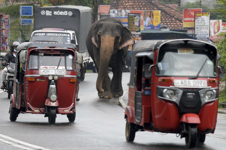 Sri Lanka announced that its economy shrank 3.6 percent due to the Covid-19 pandemic last year