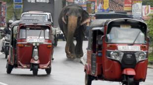 Le Sri Lanka doit emprunter à tout va pour tenter d'échapper à la banqueroute.