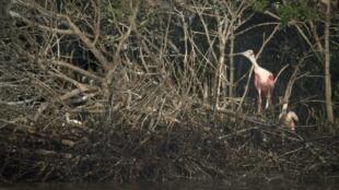 Las costas de Luisiana han sido las primeras víctimas de la marea negra.