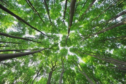 Les forêts de France couvrent un tiers du territoire.