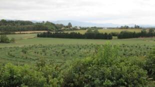 Le verger de Gotheron, vu de la colline.