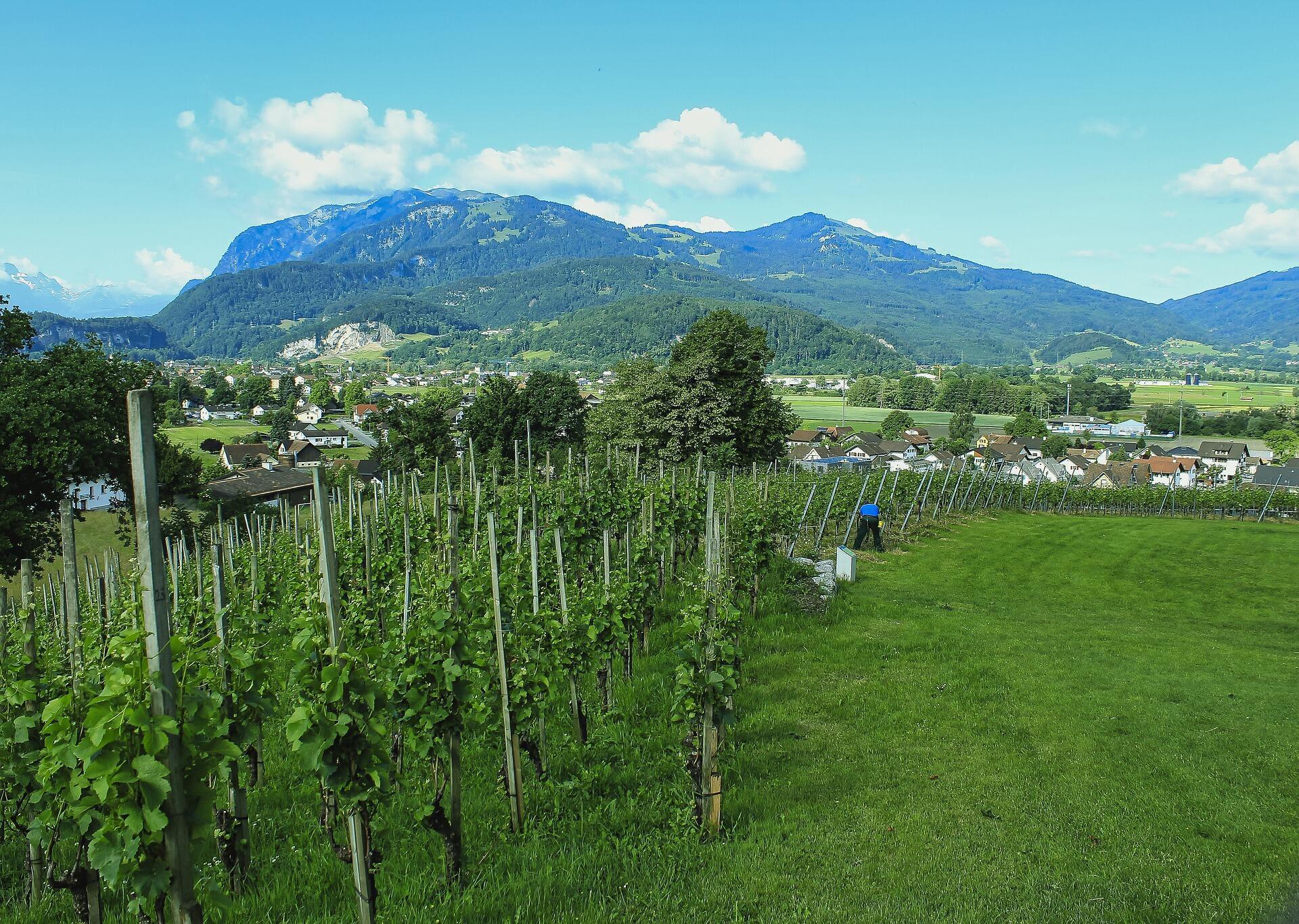 Un vignoble suisse.