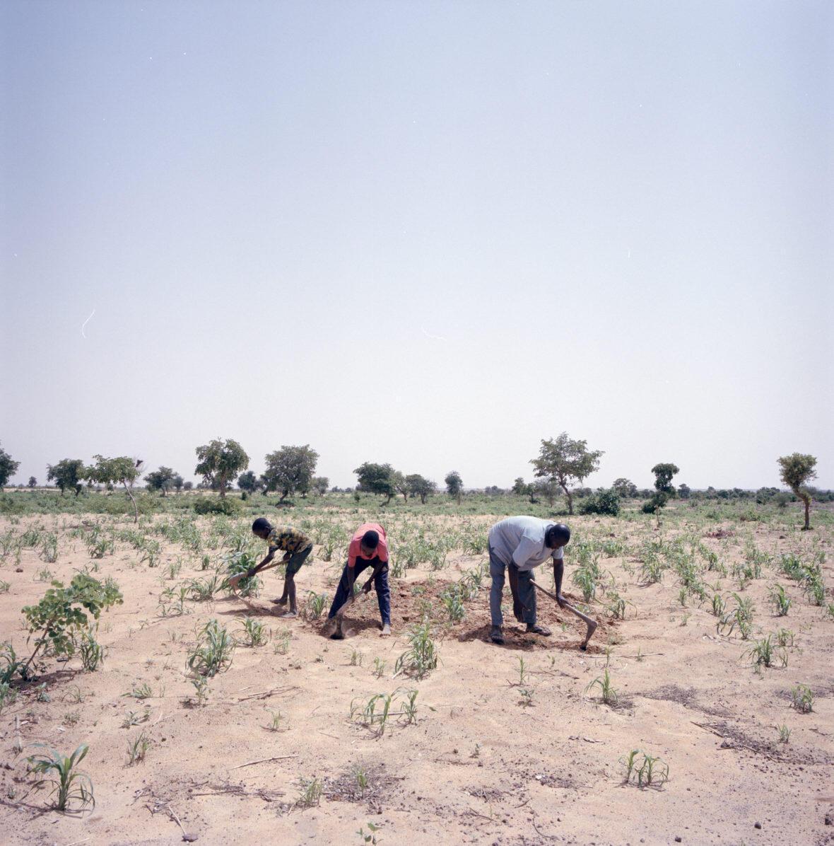 concern-niger-farmers-9-1180x1196