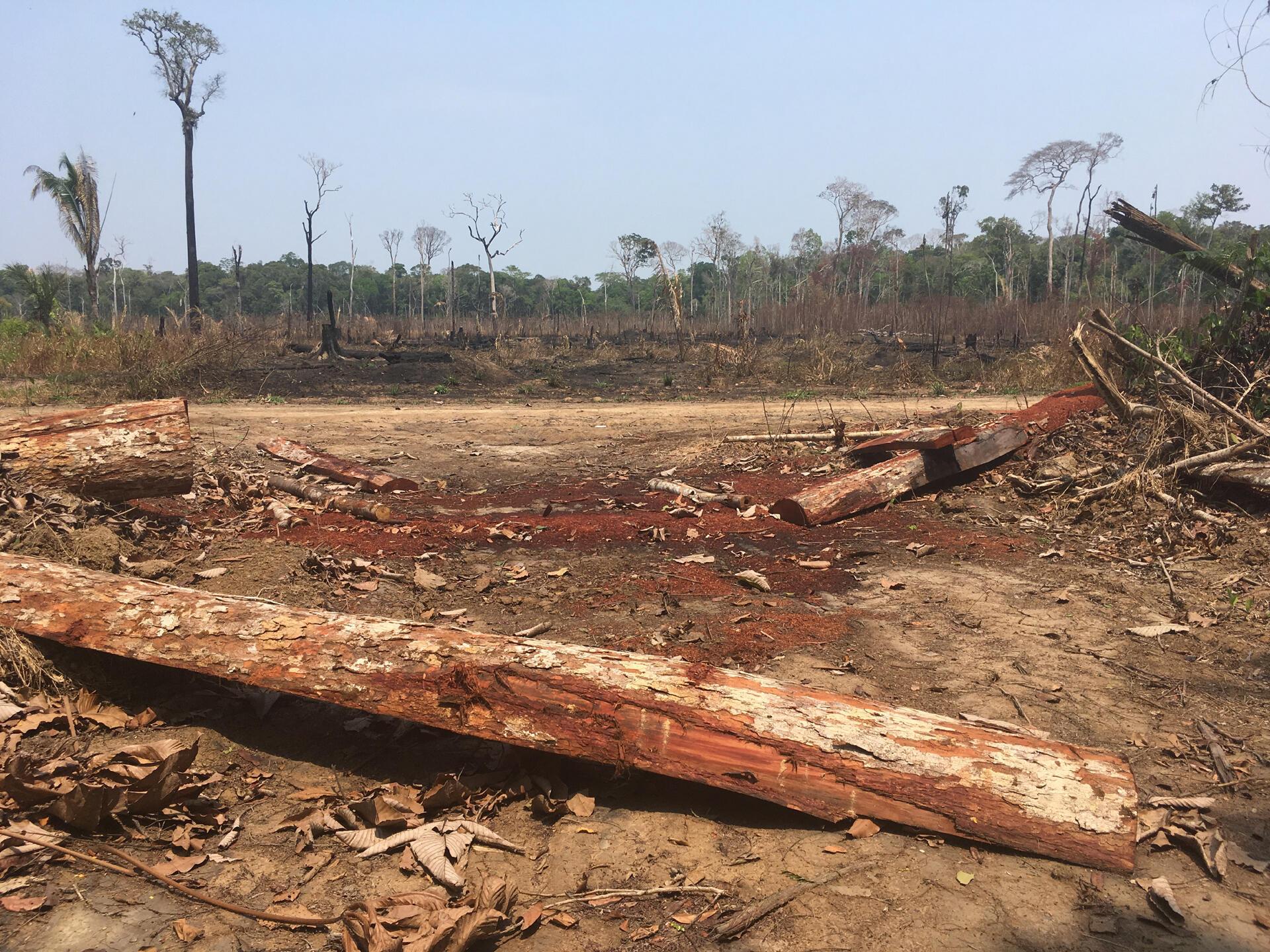 Brûlis agricoles dans l'État amazonien de Rondônia, le 31 août 2019.