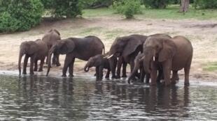Después de ver a esa familia de elefantes, ¿quién puede dispararles?