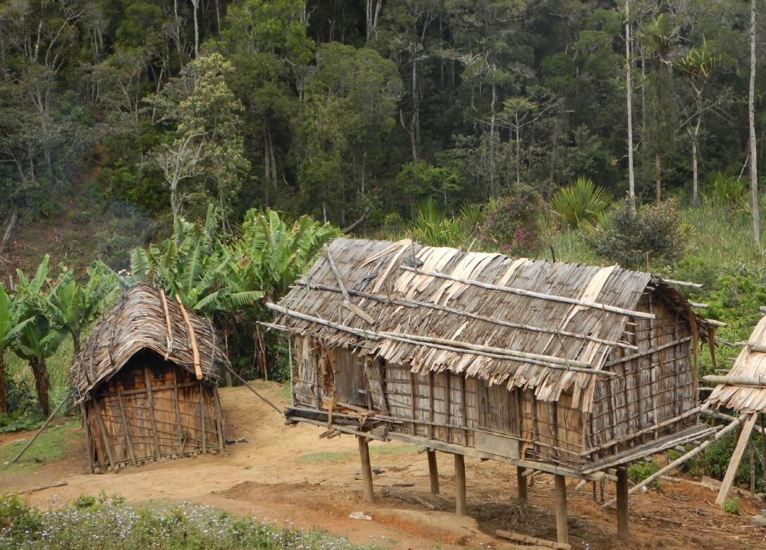People use materials collected from the forest to construct their houses.
