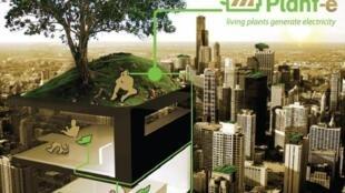 Plant-e, nguồn năng lượng sạch của tương lai.