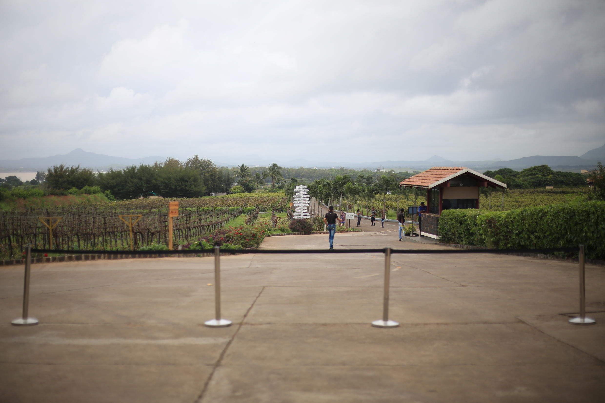A view of the vineyards around Sula winery in Nashik.