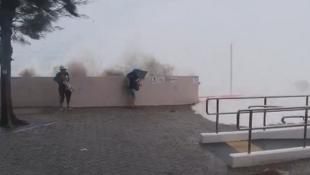 有市民不怕颶風,到去年受風影響巨大的杏花村觀浪。