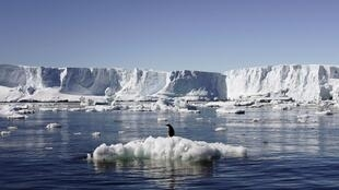 Pinguinos sobre un bloque de hielo en la estación francesa de Dumont d'Urville