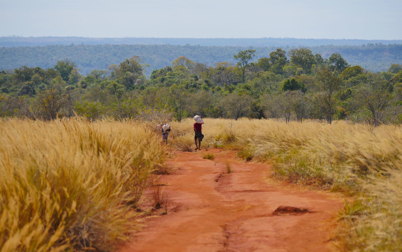 The Ankarafantsika national park in Madagascar