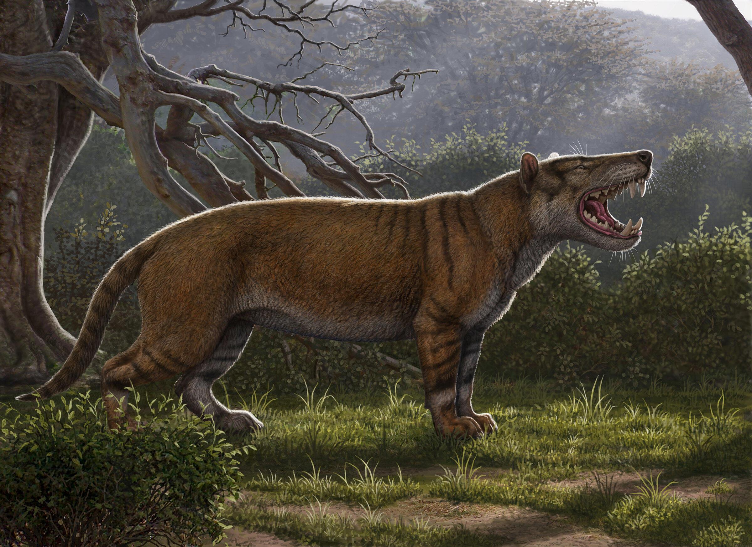 Ilustración del Simbakubwa kutokaafrika.