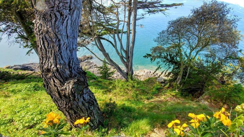 Khung cảnh mùa hạ trên hải đảo Porquerolles, miền nam nước Pháp