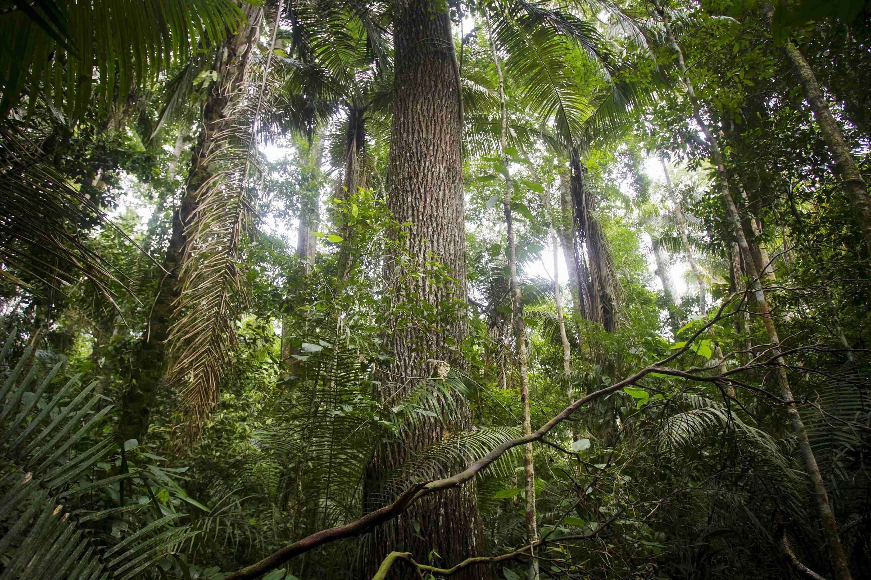 la Terre est plus verte en 2019 qu'elle ne l'était il y a vingt ans, selon une étude de M. CHEN Chi, doctorant à l'université de Boston, publié en février 2019 dans la revue Nature Sustainability