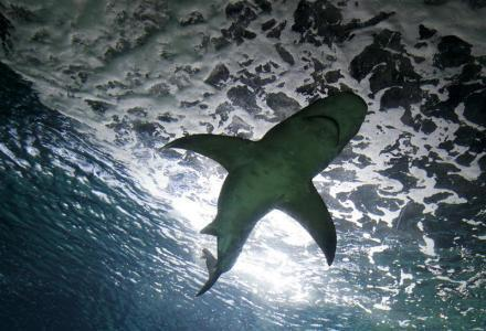 Wednesday's shark attack is the first of this year on Reunion Island