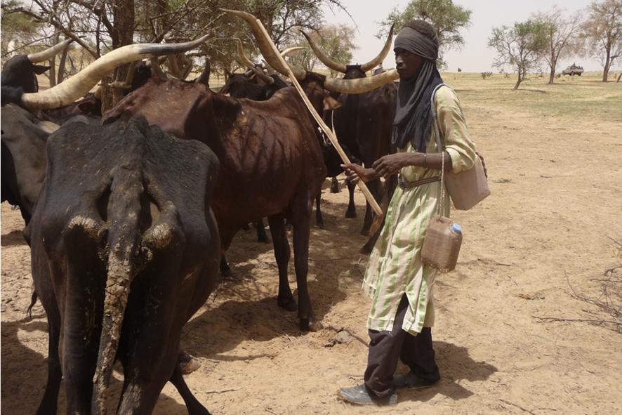 Un troupeau de vaches aux abords de la réserve de Gadabedji, dans la région de Maradi au Niger.