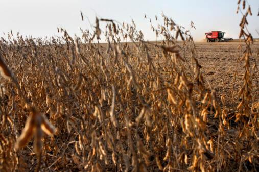 Un champ de soja aux Etats-Unis.