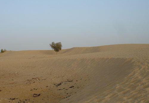Dans la région désertique de Goundam.